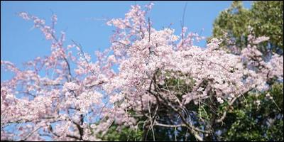 170531お花見